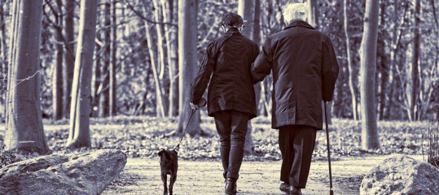 podologia geriatrica, podogia segovia, podologos segovia, podologia geriatrica en segovia